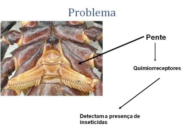 Veneno para Escorpião: A Prevenção é o método mais eficaz de controle do Escorpião