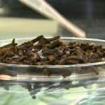 Cravo da india dengue