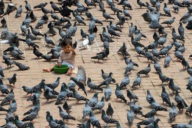 Controle de pombos protege e promovequalidade de vida de quem mora e trabalha na cidade